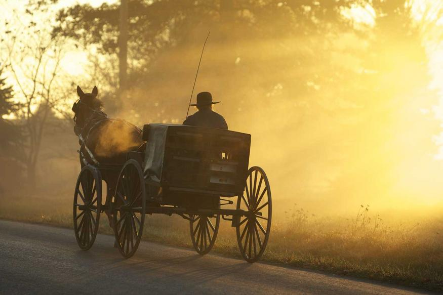 Amish man riding in a buggy at sunrise